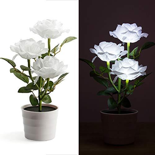 Top 10 Bonsai Outdoor Pflanzen – Außenbeleuchtung